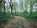 Track through the woods leading down from Lounds Hill - geograph.org.uk - 282372.jpg