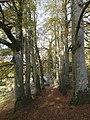 Track to Boyton Mill - geograph.org.uk - 610198.jpg