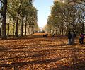 Tree Lined Path - Green Park - geograph.org.uk - 1573527.jpg