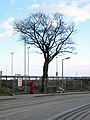 Tree by Tesco, Bangor (2) - geograph.org.uk - 756888.jpg