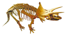 Triceratops Royal Tyrrell (retouched-1).png