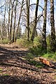 Tukwila - benches off of Green River Trail.jpg