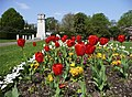 Tulips, Chase Green, Enfield - geograph.org.uk - 1263124.jpg