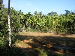 Landscape of a Tulu Nadu village