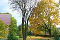 Tyniewicze Duże, jesień - panoramio (2).jpg
