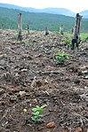 USAID helps Vietnam conserve biodiversity through community involvement. (5071427148).jpg