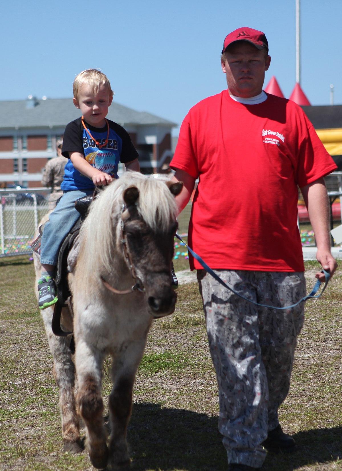 Pony Wikipedia