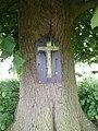 Val-Meer-Kwartjesboom (2).jpg