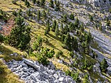 Valle de Pineta - Paisaje 02.jpg
