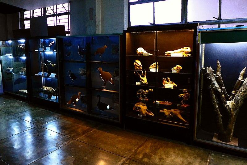 800px-Vertebrate_specimen_displays_at_UPLB_MNH.jpg