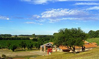New World wine - Vineyards and winery in Médanos, Buenos Aires, Argentina