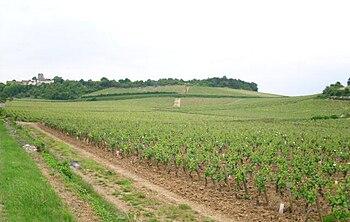 Vignoble de mercurey 5.JPG