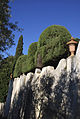 Villa Capponi - West Garden Wall - Hedge.jpg