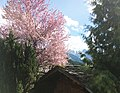 Village Gosau - Austria.jpg