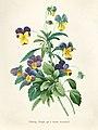 Vintage Flower illustration by Pierre-Joseph Redouté, digitally enhanced by rawpixel 39.jpg