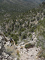 Virgin Peak ascent 1.jpg