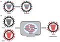 Viruses-10-00497-g003.png