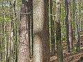 Vosges du Nord-Arbres.jpg