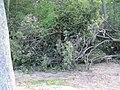 WE Picnic Shelter (6100331160).jpg