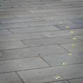 Walk the Line - Joe Sheehan - Wellington Cenotaph Memorial precinct 03.png