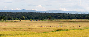 Lampang Province - Rice harvest in Wang Nuea District with the mountains of the Phi Pan Nam Range in the distance