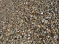 Wet pebbles.JPG
