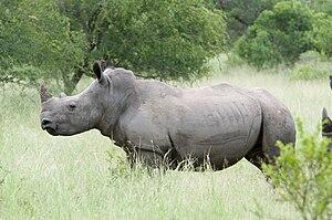 Willem Pretorius Game Reserve - Image: White Rhino