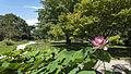 Wien 03 Botanischer Garten 04.jpg