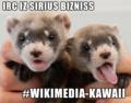 Wikimedia-kawaii-lolcat.png