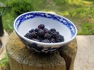 Dewberry - Wild dewberries, picked in North Texas