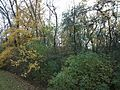 Wild Meadows Trace, Elmhurst, IL. New Yellow Leaves - panoramio.jpg
