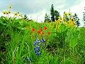 Wildflowers on Starvation Ridge, Wallowa-Whitman National Forest (26800784745).jpg