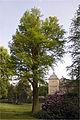 Winfried Lucassen Eibe Schloss Garath.jpg