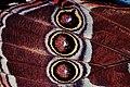 Wing of a butterfly1.jpg