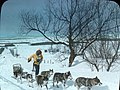 Winter sports in Quebec- dog sledding, QC, about 1934 (5348752873).jpg