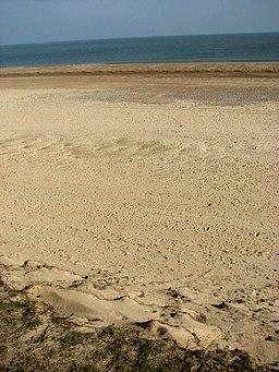 Winterton Beach at low tide - geograph.org.uk - 581800