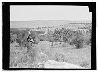 Woman standing with jar on head, Nazareth in the distance LOC matpc.14018.jpg