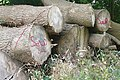 Wood pile near Buckholdhill Farm - geograph.org.uk - 915276.jpg
