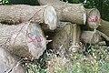 Wood pile near Buckholdhill Farm - geograph.org.uk - 915276.jpg