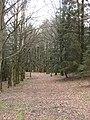 Woodland, Bellaty Lodge - geograph.org.uk - 361962.jpg