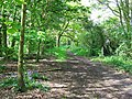 Woodland Path, adjacent to Golf Course - geograph.org.uk - 798648.jpg