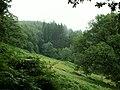 Woodland near Glaspwll - geograph.org.uk - 34389.jpg