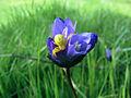 Yellow Spider Blue Dicks by Dawn Endico.jpg
