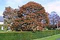 Yew Hedge at Redlynch - geograph.org.uk - 1519388.jpg