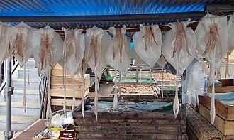 Karatsu, Saga - A fresh squid in Yobuko