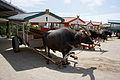 Yubu Island Okinawa Pref Japan18n4500.jpg