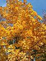 Złota jesień - panoramio.jpg