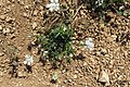 Zakynthos flora (35743844002).jpg
