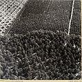 Zoltan Kluger. Swamps transformed into Fruit Producing Land.jpg