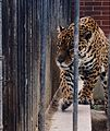 Zoo, Baku, Azerbaijan.jpg